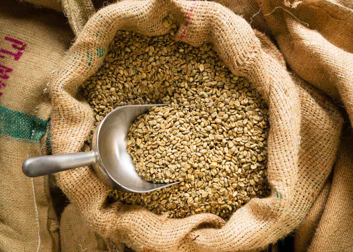 can you eat raw coffee beans